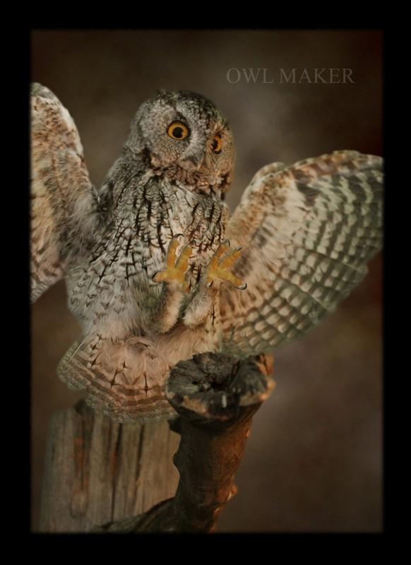Hobbyhuren In Owl